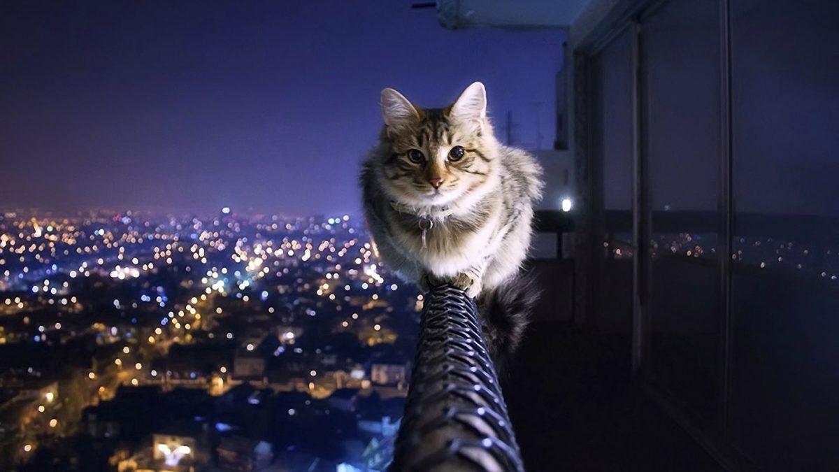 Кот на высоте