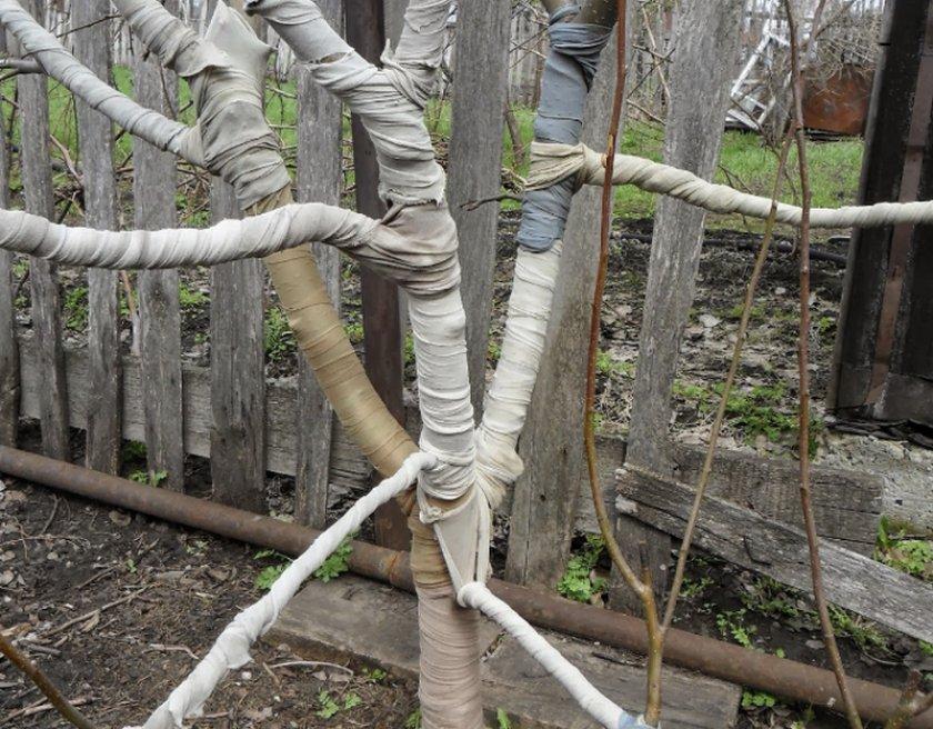 Готовка плодового дерева к зимовке